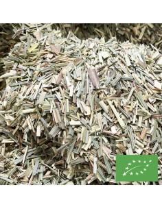 Lemongrass Certifié BIO